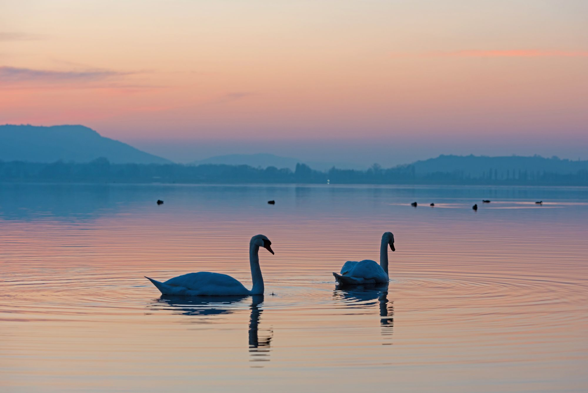 Natural adventures on Lake Constance