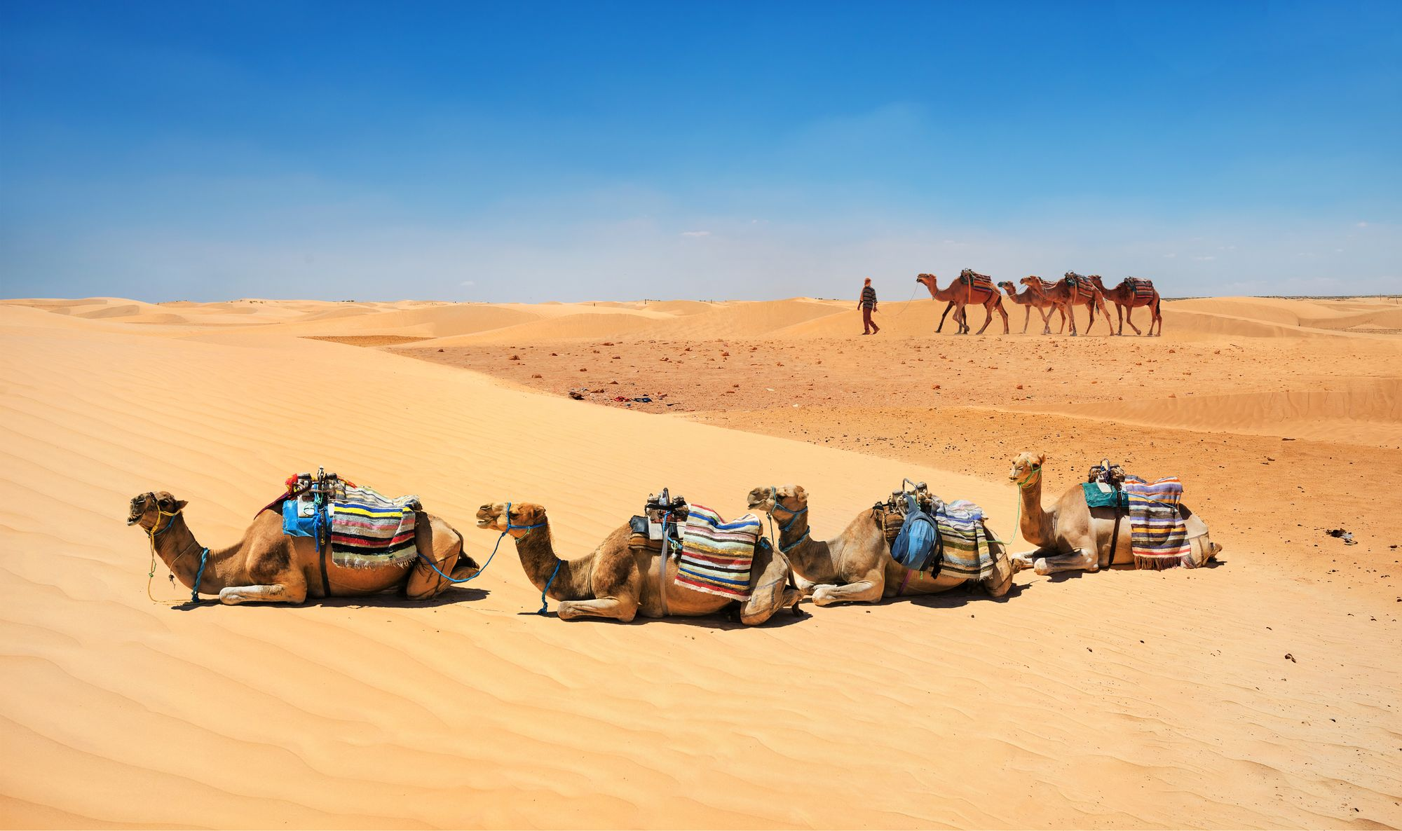 The city of Douz is the last stop before the Sahara