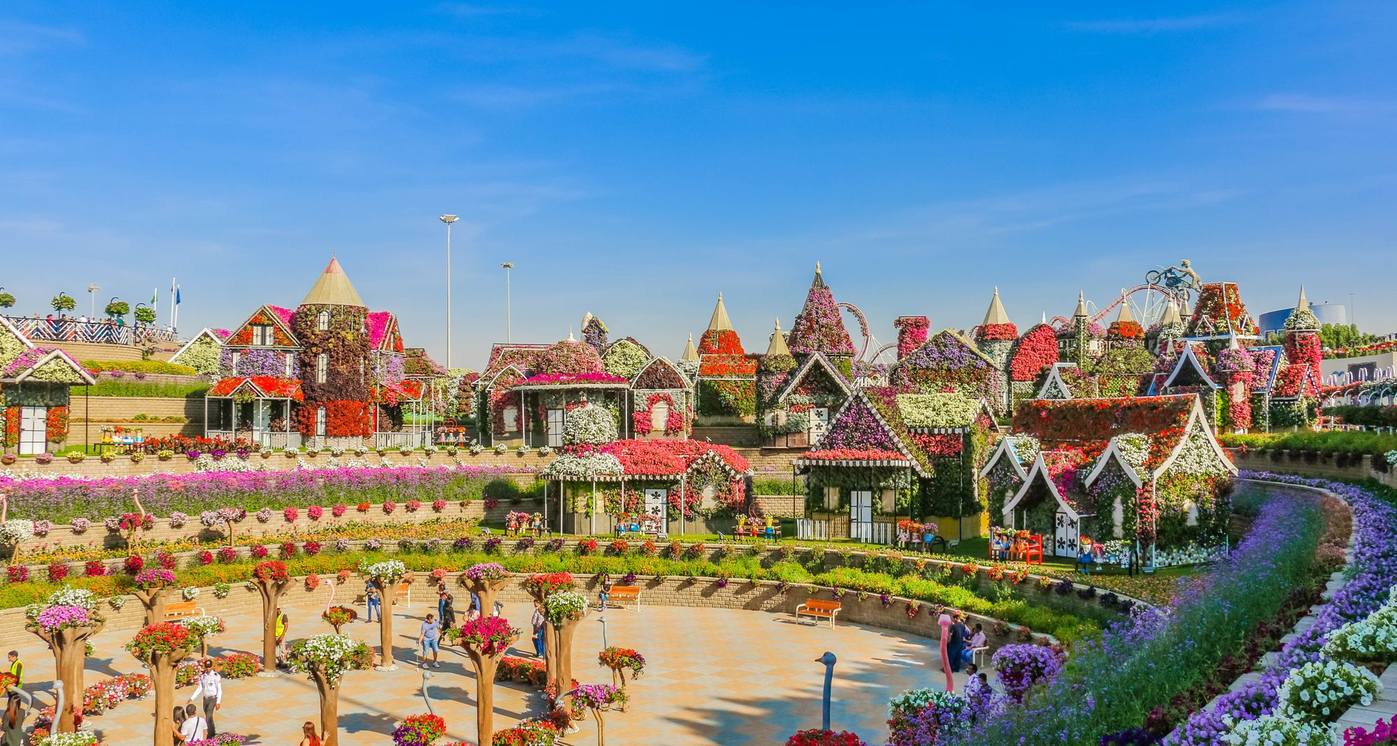 The miracle Gardens in Dubai